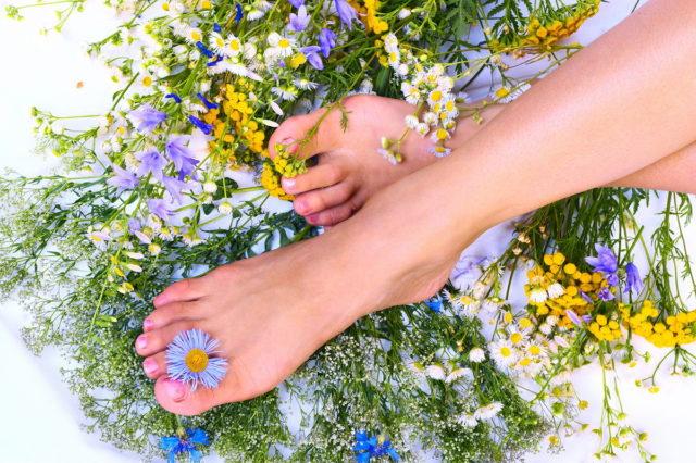 Лечение варикоза вен на ногах пчелами