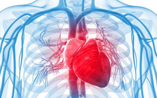 Заболевание, вопреки частому заблуждению, может поразить не только сердце, но и другие органы и ткани