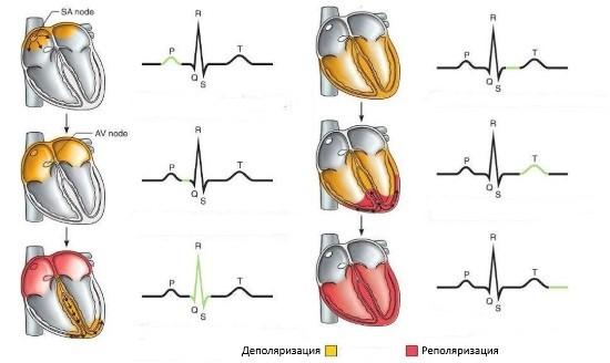 При экстренном поступлении с болью в сердце синдром обнаруживается у от 13 до 48% пациентов