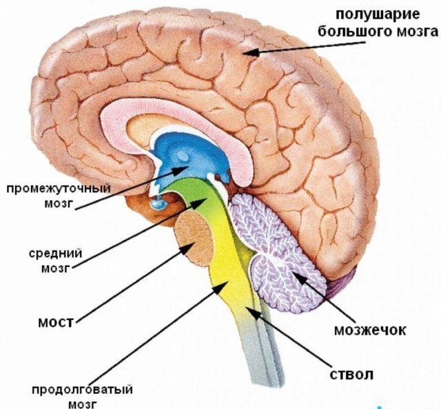 Церебральная ангиодистония — нарушение, произошедшее в сосудах головного мозга, повлекшее за собой сбой в притоке и циркуляции крови