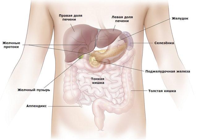 В результате закупорки артерий развивается острая ишемия селезенки, отмирает весь орган или ее часть