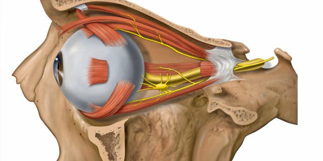 Ишемическая нейропатия зрительного нерва характеризуется внезапным снижением остроты зрения, сужением и выпадением полей зрения