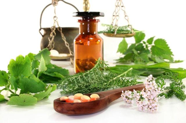Травы от атеросклероза сосудов головного мозга следует применять строго в указанной дозировке и пропорциях